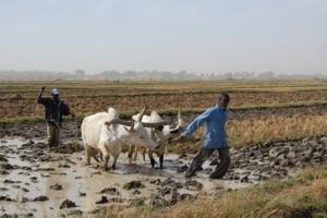 En direct du Mali: création d'un Observatoire des exploitations familiales