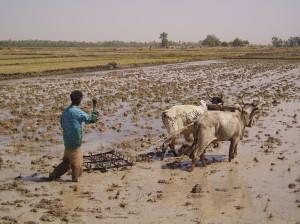 Présentation-débat: La Finance inclusive exclut-elle les producteurs agricoles ? La situation au Niger