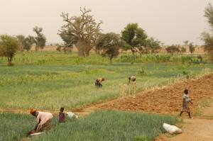 Création d'une antenne SOS Faim au Burkina Faso