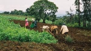 Paroles du Sud: nos choix agricoles, levier du changement systémique