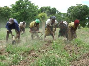 Un été solidaire pour la production vivrière en Afrique