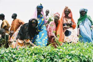 16 octobre: Journée Mondiale de l'Alimentation