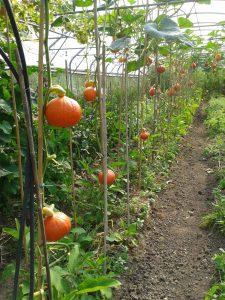 FAIRE MIEUX AVEC MOINS – L'agroécologie, pourquoi ça coince alors que ça marche ?!