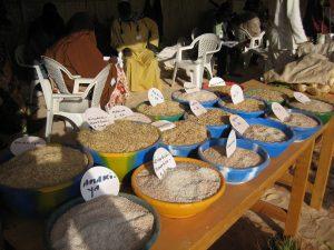 Promotion et défense du droit à l'alimentation au Niger