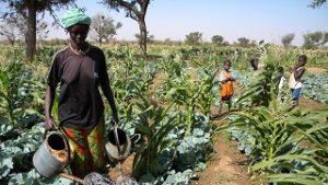 Financer l'agriculture familiale: une clé du développement !