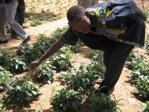 Témoignage-vidéo du Niger sur le projet d'accaparement de terres