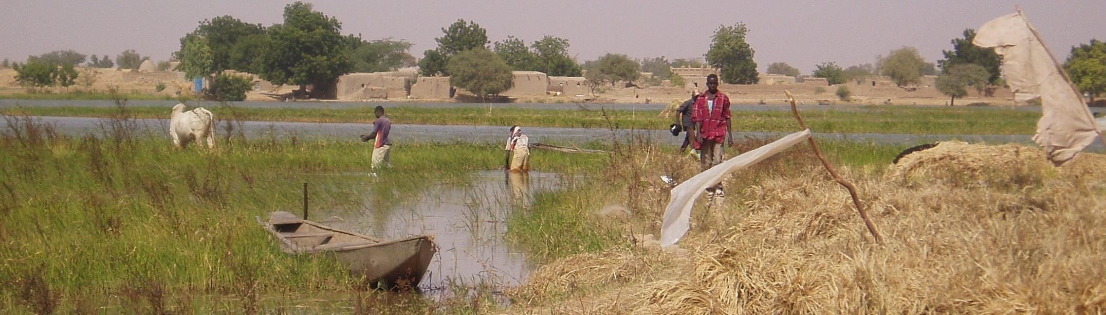 Cadre Régional de Concertation des Organisations de Producteurs de Riz d'Afrique de l'Ouest (CRCOPR)