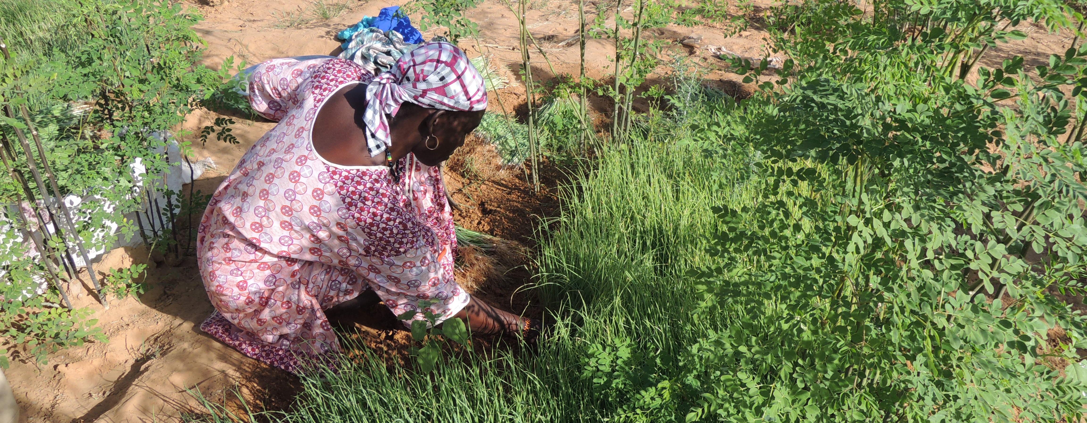 Fédération des coopératives maraîchères du Niger (FCMN-Niya)