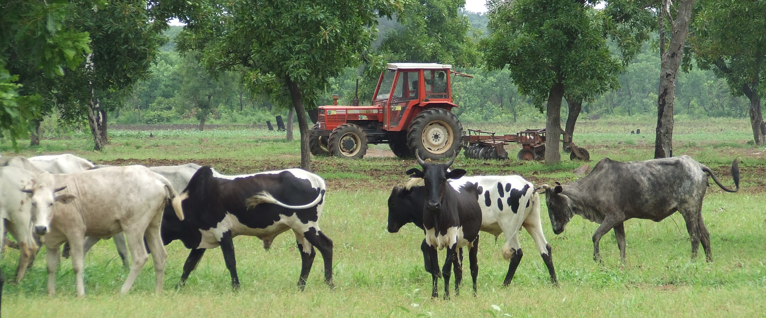 AGRI+ (Mali & Burkina Faso)