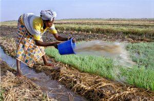 Les femmes, piliers de la production agricole et de la sécurité alimentaire en Afrique.