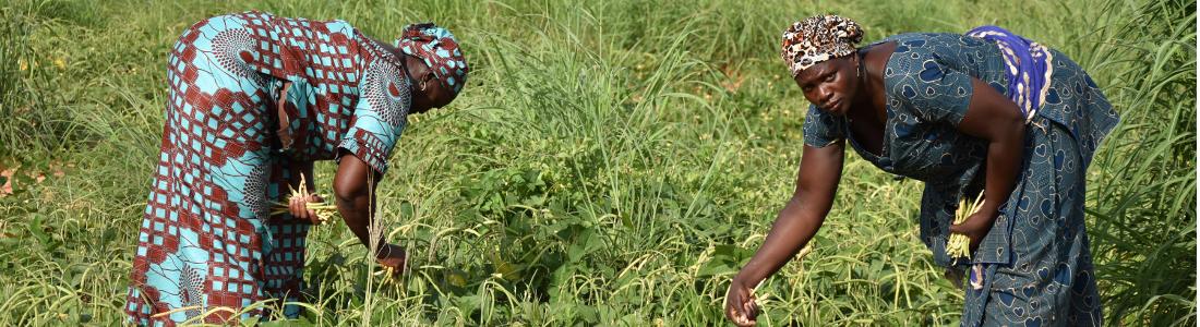 UPFN, Union Provinciale Féminine Namanegbzanga pour la Promotion de la Filière Niébé du Bam (UPFN-PFN/B)