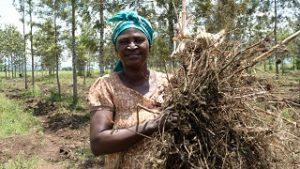 Atelier « régénération des sols en milieu aride et tropical »