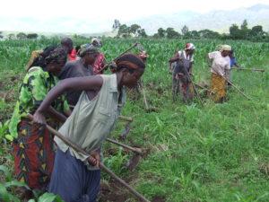 NATURATA lance son action de Noël en faveur des agriculteurs du Kivu !