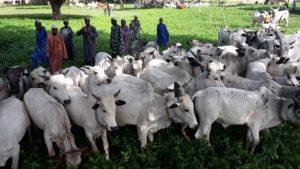 [Communiqué de presse] Local ou importé: quelle est l'option la plus durable pour le lait au Sahel ?