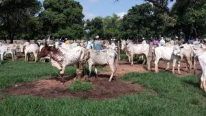 [Agenda] 20 mai – Webinaire SOS Faim – Pastoralisme en Afrique de l'Ouest
